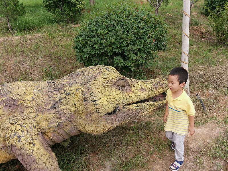 朱山的鳄鱼